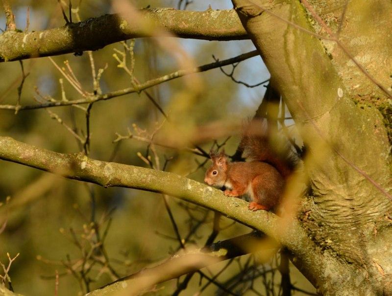 Egern i Pilbrodalen