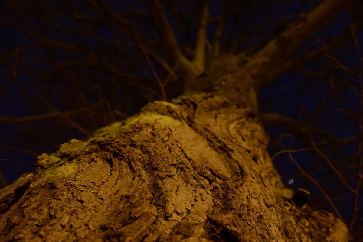 Træ ved Skanderborg kulturhus