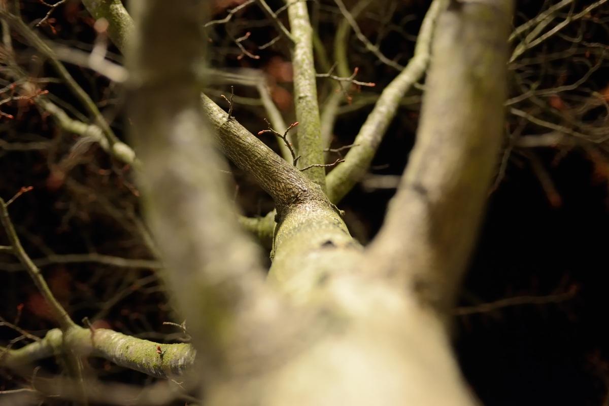 Træ i Skanderborg