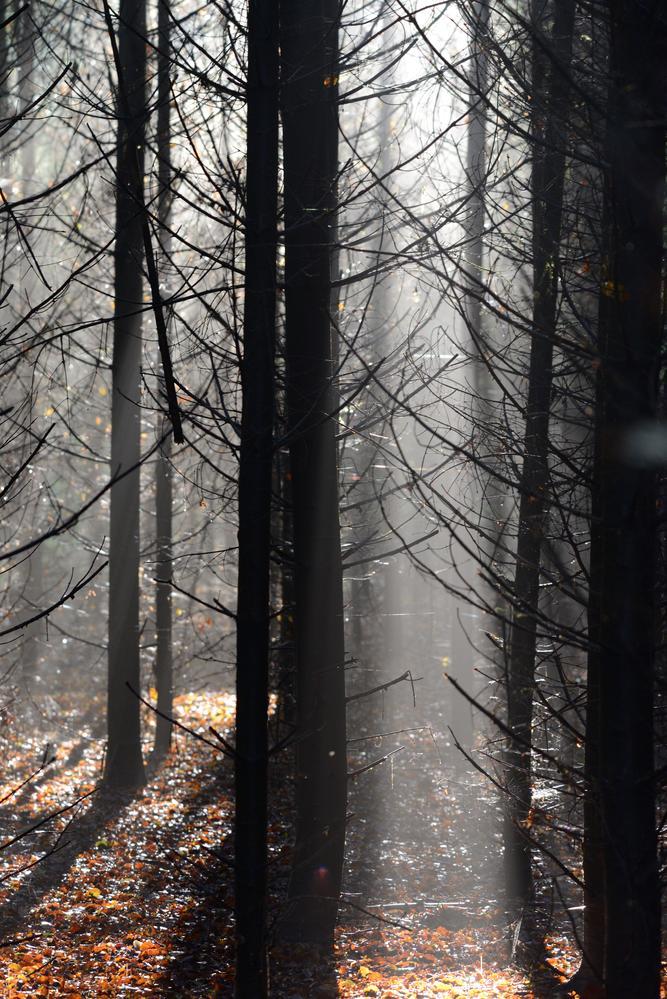Stemning i skoven