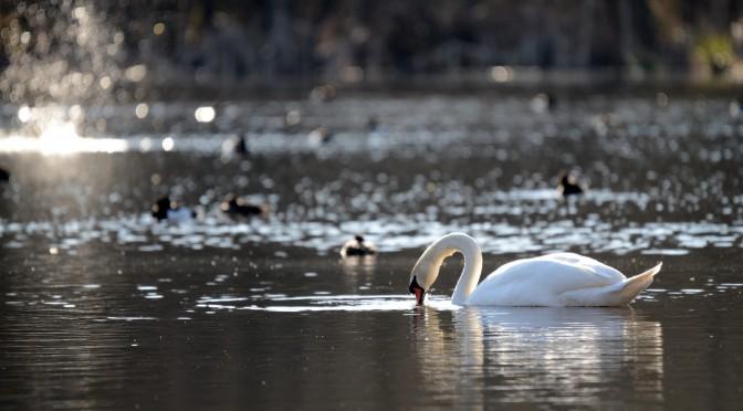 Fugle omkring Døjsø og Sumpstien i Skanderborg