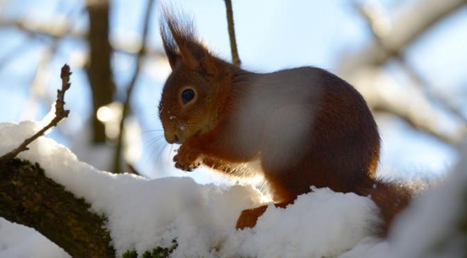 Vinter tur om Vestermose