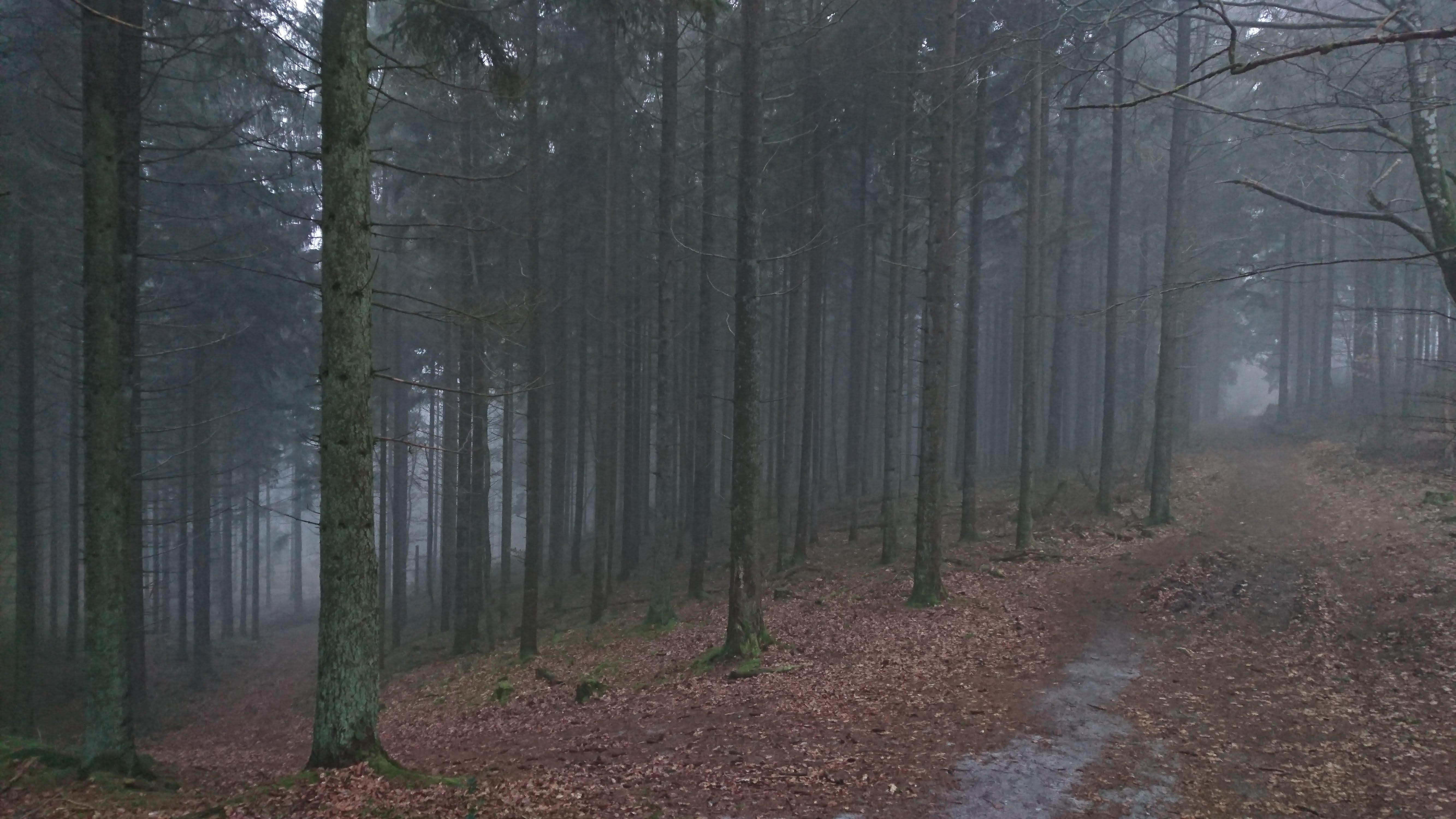 I skoven op af Sukkertoppen