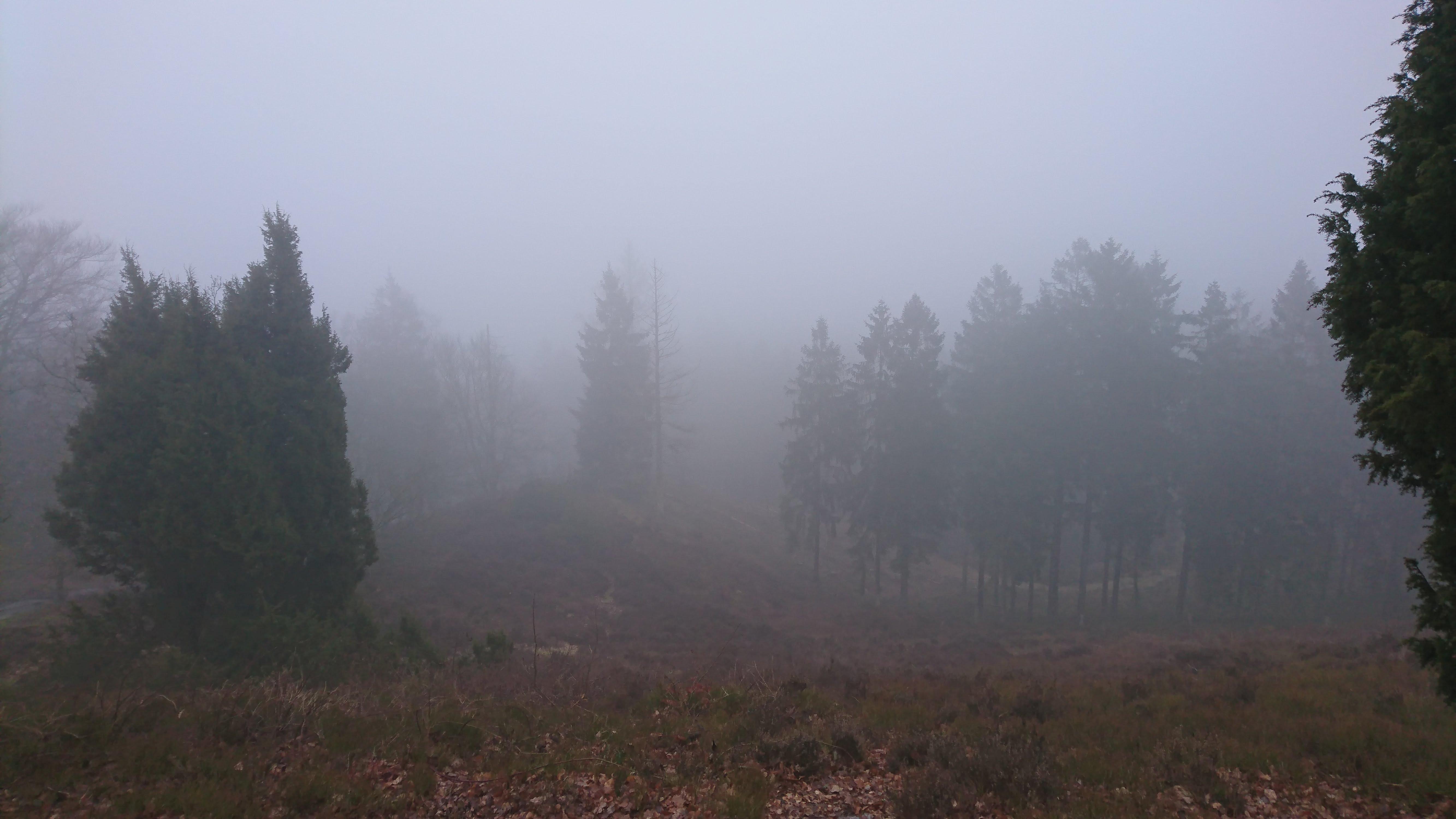 Tåge på Sukkertoppen