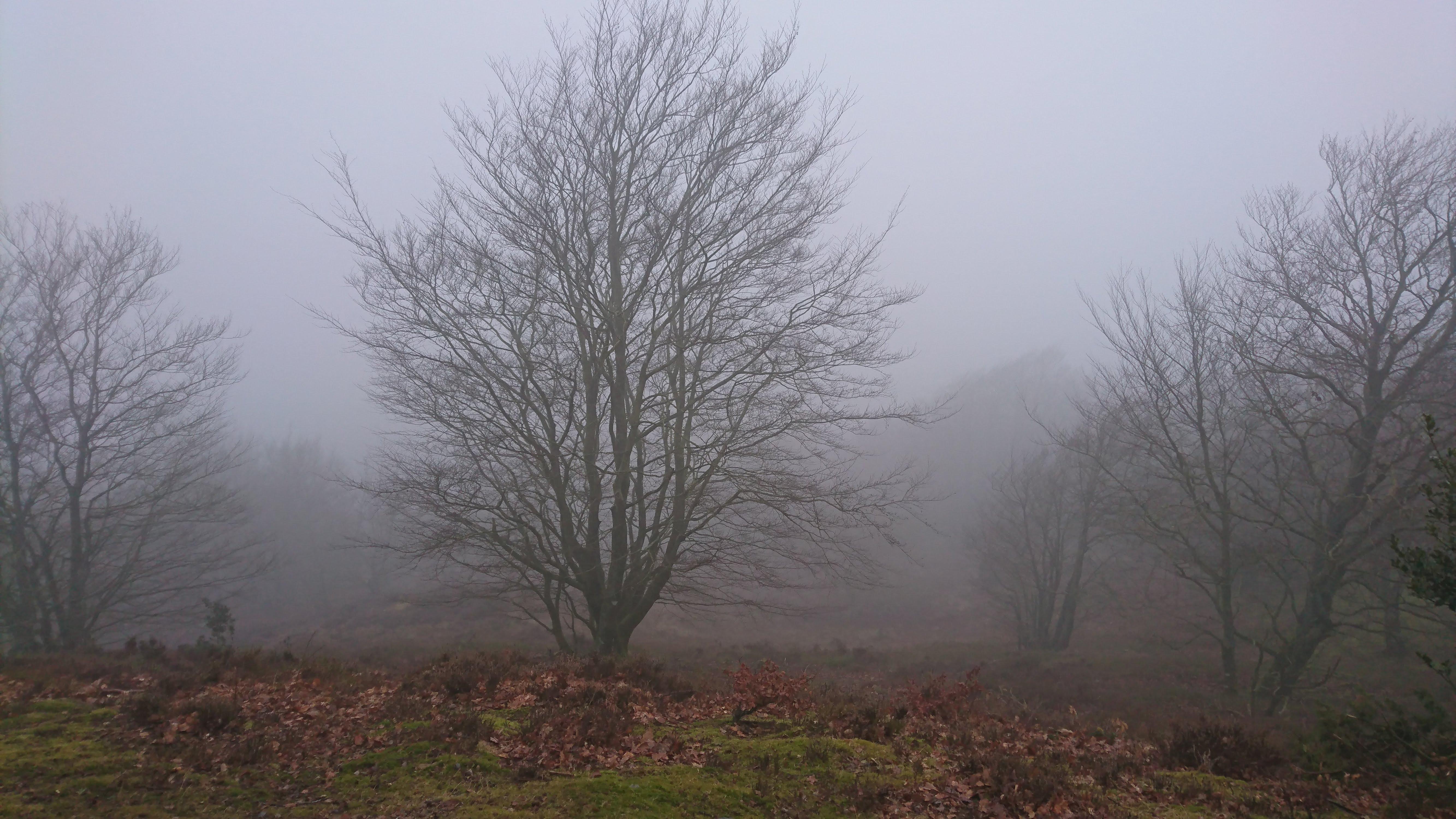 Mere tåget udsigt