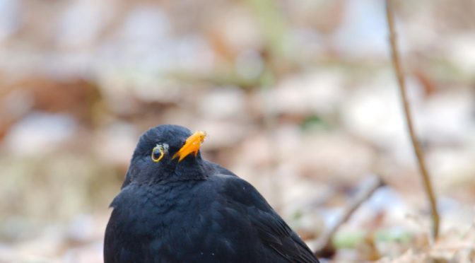 Fugle i kulden