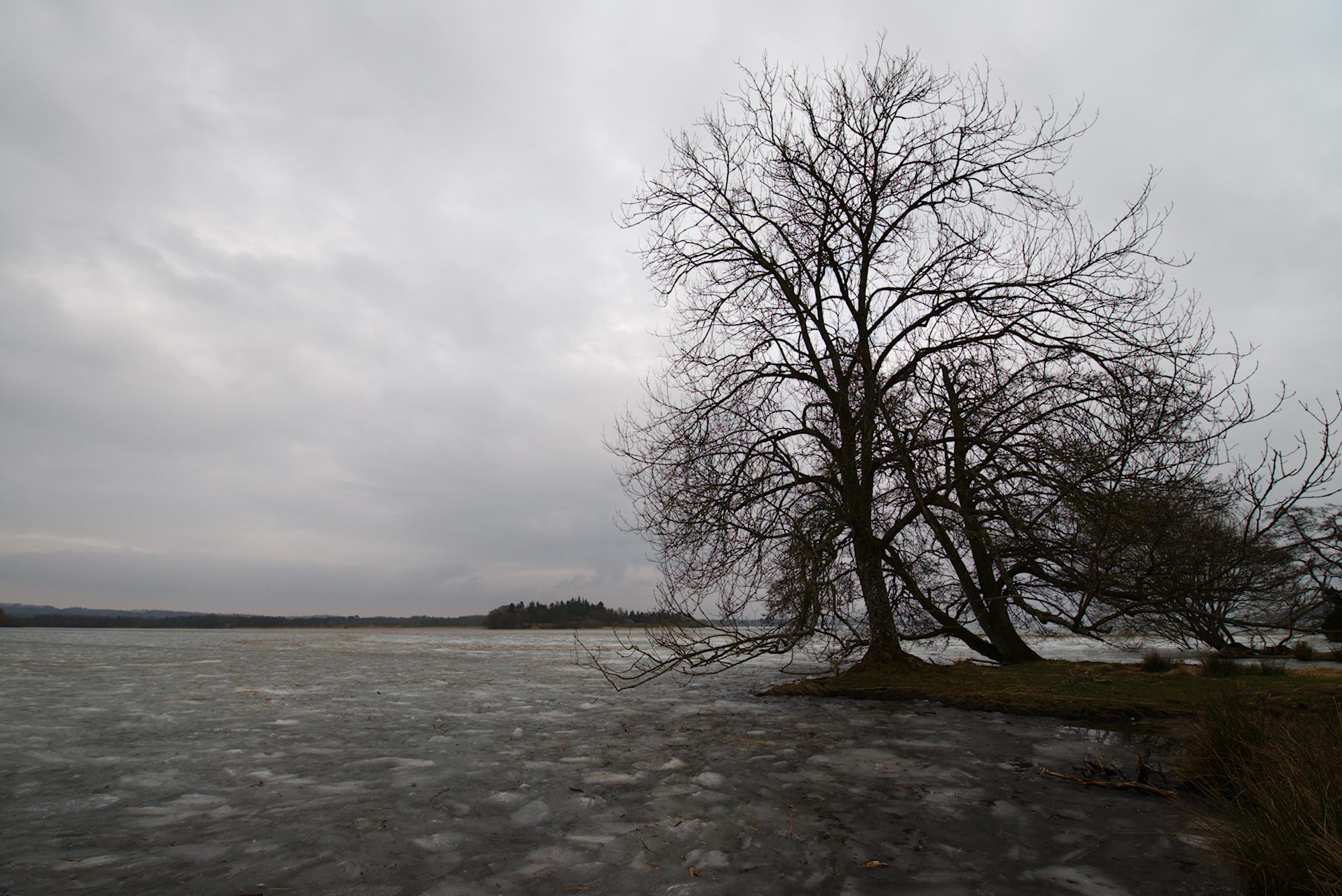 Is og træ