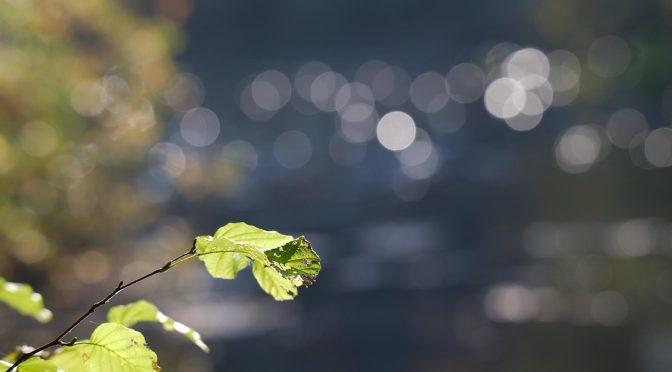 Efterår og løvfaldssommer